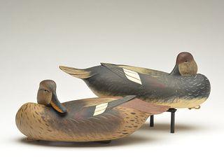 Rigmate pair of gadwalls, Bob White, Tullytown, Pennsylvania.