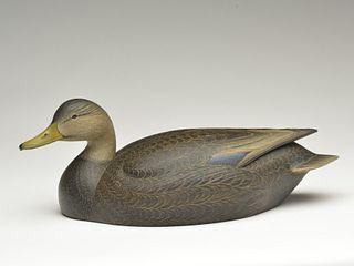Hollow carved black duck , Marty Hanson, Hayward, Wisconsin.