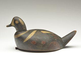 Harlequin duck, Mark McNair, Craddockville, Virginia.