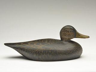 Black duck, Elmer Crowell, East Harwich, Massachusetts.