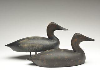Rigmate pair of long body style canvasbacks, Thomas Chambers, Toronto, Ontario.