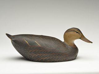 Stylish black duck, Ward Brothers, Crisfield, Maryland.
