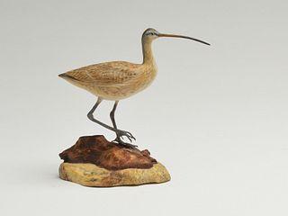 Miniature long billed curlew, Steve Weaver, Cape Cod, Massachusetts.