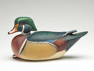Wood duck drake, Ben Heinemann.