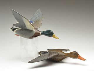 Rare and possibly the only pair of full size flying mallards, Hec Whittington, Oglesby, Illinois, circa 1950.