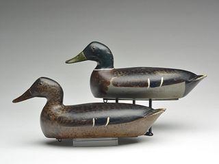 Rigmate pair of mallards, Bert Graves, Peoria, Illinois.