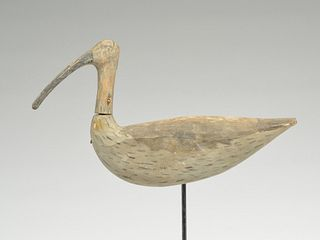 Root head curlew from North Carolina.