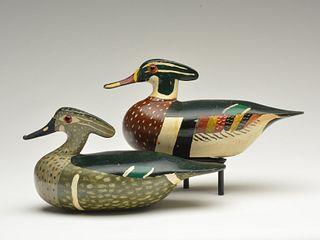 Pair of wood ducks, Otto Garren, Pekin, Illinois.