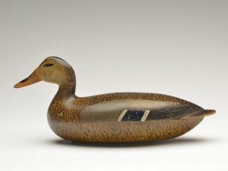 Early style mallard hen, Michael Valero, Spring Valley, Illinois, 2nd quarter 20th century.