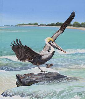 "Chuck Ripper (B. 1929) ""Brown Pelican"""