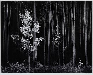Ansel Adams(American, 1902-1984)Aspens, Northern New Mexico, 1958