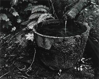 Edward Weston (American, 1886-1958) Untitled