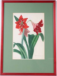 Floral Print, Hybrid Amaryllis Regina-vittata