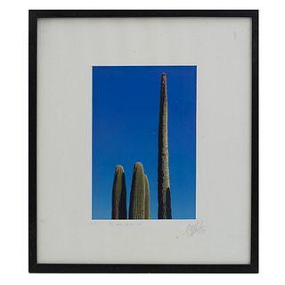 Firma sin identificar. El sueño de la luna. Impresión fotográfica. Enmarcada. 33 x 23 cm
