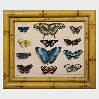 François le Villain (active 1820-1830): Les Papillons: Ten Plates
