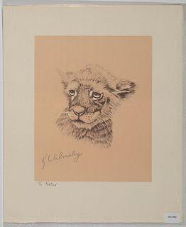 K. Walmsley, Untitled (Tiger Cub)