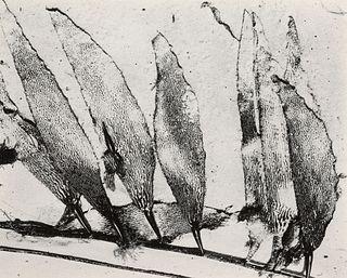 EDWARD WESTON - Seaweed, Carmel, 1930