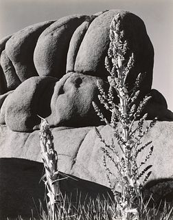 EDWARD WESTON - Yucca and Granite, Mojave, 1937