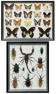 Two Framed Insect Specimen Mounts, 20th c., one with 11 specimens; the second with 18 butterfly specimens, Butterfly- H.- 13 7/8 in., W.- 17 7/8 in..