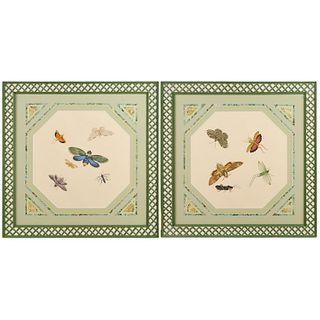 Pair moth & insect studies, gouache, Parish-Hadley