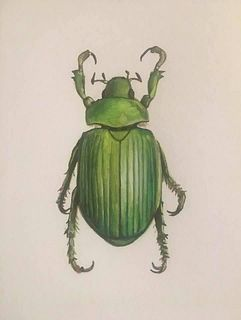 LAURIE GIBERSON, Green Beetle