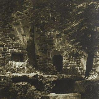 Lynn Geesaman Tigers Philadelphia Zoo Garden Series Photograph