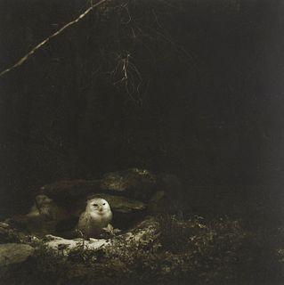 Lynn Geesaman Owl Philadelphia Zoo Garden Series Photograph