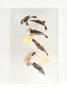 """A COLLECTION OF SPECIMEN BUTTERFLIES """"IN FLIGHT,"""" ACRYLIC CASE, SIGNED, MODERN,"""