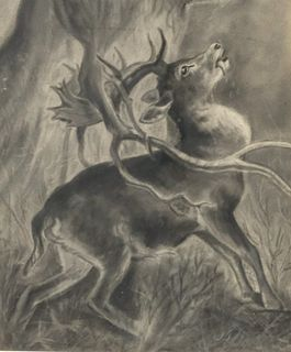 """Charcoal Drawing Stag After """"The Stag in Trouble"""""""