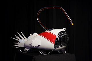 Rachel Paolino, Striped Anglerfish