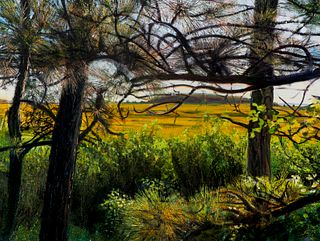 Jon Friedman, Wellfleet Audubon, Marsh View #2387