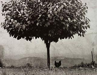 Edward Boubat (French, 1923-1999) L'Arbre et la Poule, 1950