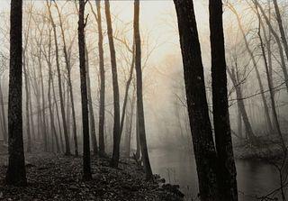 Paul Caponigro (American, b. 1932) Redding Woods, Conn., 1968