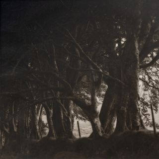 Lynn Geesaman (American, b. 1938) A pair of photographs from the South of England series (Path and Gate; Trees), 1991