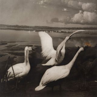 Lynn Geesaman (American, b. 1938) A group of six photographs from the Natural History series, 1985