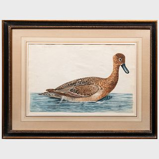 English School: The Female Pintail