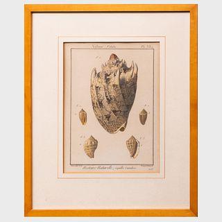 After Marechal: Histoire Naturelle: Coquillages Univalves