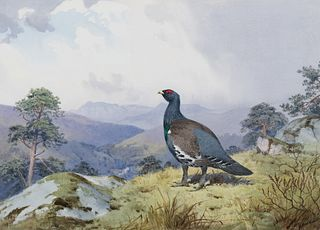 John Cyril Harrison (1898–1985) — Black Cock; Eagle in Flight; Lesser Bustards; Secretary Birds at Zimbabwe Ruins