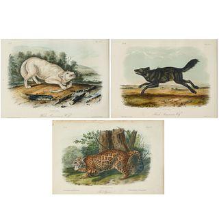(3) Audubon lithographs, quadrupeds