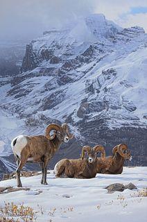 Daniel Smith (b. 1954) — Alpine Kingdom (2021)