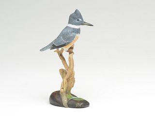 Miniature belted kingfisher, Steve Weaver, Cape Cod, Massachusetts.