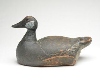The only known Canada goose, Frank Buchner, Erie, Pennsylvania, circa 1900.