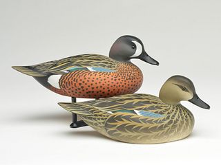 Pair of bluewing teal, Oliver Lawson, Crisfield, Maryland.