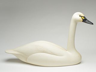 Whistling swan, Oliver Lawson, Crisfield, Maryland.