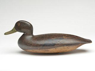 Hollow carved black duck, by a member of the Blair Family, Philadelphia, Pennsylvania, last quarter 19th century.
