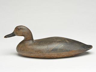 Greenwing teal hen, John Blair, Sr., Philadelphia, Pennsylvania, 2nd half 19th century.