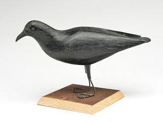 Possibly unique crow, Gus Wilson, South Portland, Maine.