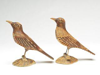 Pair of brown thrashers on wooden bases, Joseph Rumuald Bernier (1873-1951) Biddeford, Maine.