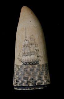 American Scrimshaw Sperm Whale Tooth, circa 1850