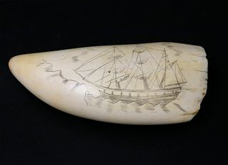Large Sperm Whale Tooth, last quarter of the 19thCentury